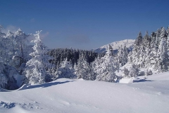 winter007