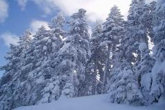winter008
