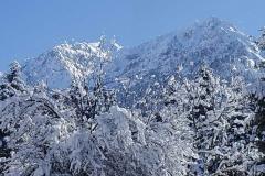 winter029