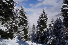 winter035