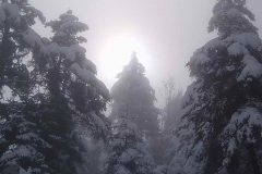 winter036