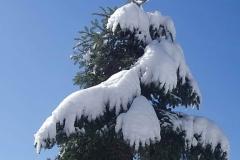 winter054